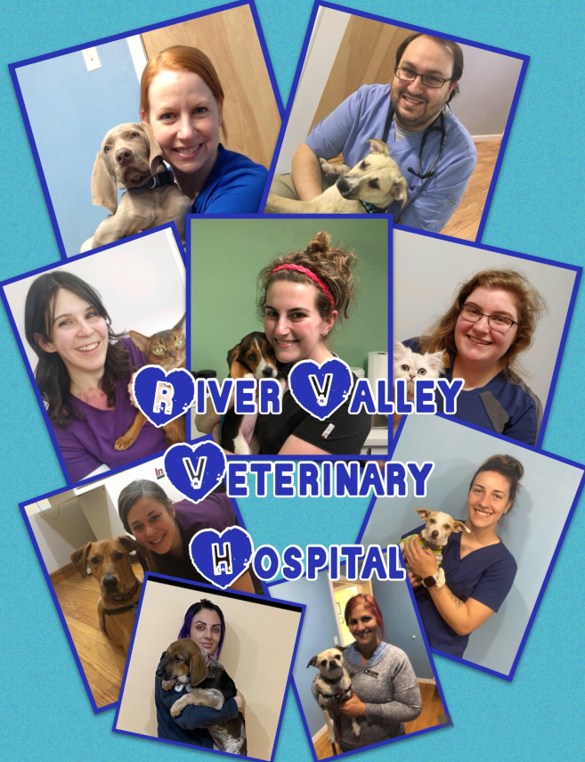 (clockwise from top center): Dr. Melissa Moore,Tiffany, Sarah,Dorie, Dr. Christopher Celentano, Krystal, and Morgan